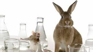 makeup testing on animals pros and cons makeup pros animal testing