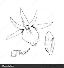 иллюстрация орхидеи цветы эскиз рисованной с черный линер стоковое