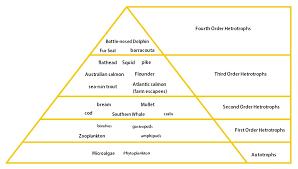 food web pyramid food web and trophic pyramid dentrecasteaux channel