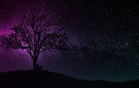 With the introduction of dark themes and dark. Wallpaper Dark Wallpaper Black Art Tree Man Hill Purple Silhouette Starry Sky Miscellaneous 4k Uhd Background Images For Desktop Section Raznoe Download