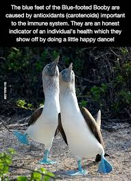 The blue feet of the Blue-footed Booby - 9GAG via Relatably.com
