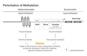 Illumina Sequencing Flow Chart Methylation Sequencing Sequence Bisulfite Converted Dna