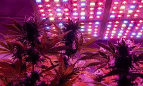 2021 guide diy led grow lights on a