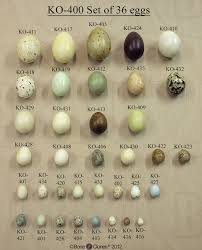 Nests Eggs Montana Science Partnership