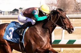 Updated Preakness Stakes 2019 Odds And Analysis