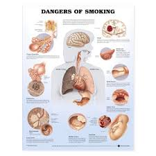 ask the experts dangers of smoking essay the cause and effect essay on smoking informative speech on tattoos talks about how cigarette smoking has devastating effects on the human body and at the