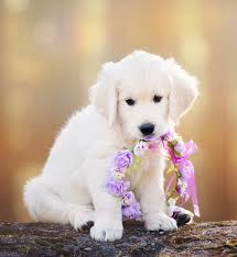 cute puppy. Beautiful Cute Cute Puppy Names In Cute Puppy N
