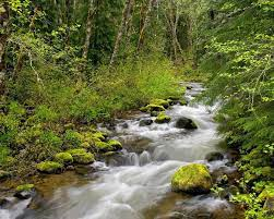 Forest River Wallpaper Rivers Nature ...