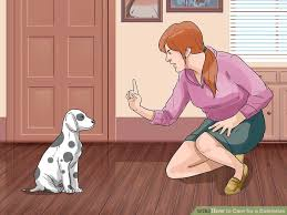 How To Care For A Dalmatian With Pictures Wikihow