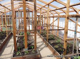 picture of greenhouse guide to build a wood greenhouse at home
