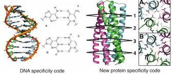 Hydrogen Bonding Adding Modular Hydrogen Bond Networks To Protein Design