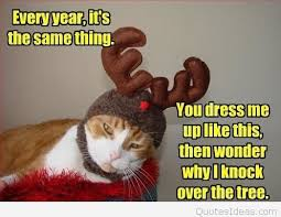 funny christmas quote with a cat