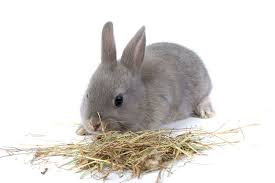 it s important to clean your rabbits hutch on a regular basis particularly in the summer