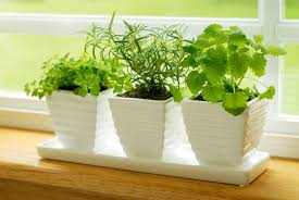 Indoor Kitchen Garden Spice Up Your Meals With An Indoor Herb Garden Sela Investments