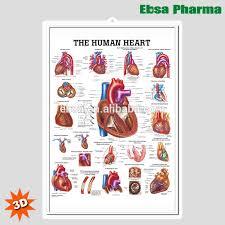 Wall Chart Of Human Anatomy 3d Medical Human Anatomy Heart Wall Charts Poster The Human Heart Buy 3d Chart Human Anatomy Wall Poster The Human Heart Product On Alibaba Com