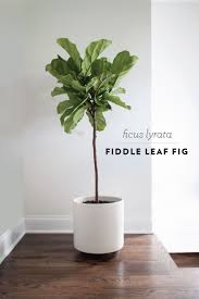 Find this Pin and more on House Plants by thatdiva28.