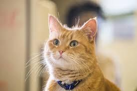 Умер знаменитый <b>рыжий кот</b> по кличке Боб — Российская газета