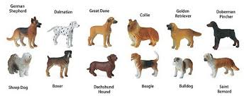 target dog breed name dogs toob key image from
