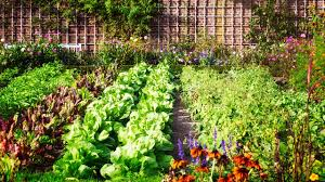 21 553 best backyard vegetable garden