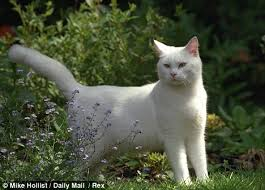 Image result for ginger and white cat with green eyes