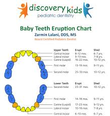 Permanent Teeth Eruption Chart Teething In Babies Pediatric Dentist In Frisco Tx
