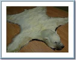 polar fur traders polar bear rug