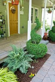 small front porch garden with anese painted fern swirl topiary evergreen boxwood shrub hakonechloa