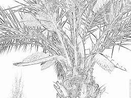 Coloriage Palmier En Fleurs Imprimer Pour Les Enfants Dessin