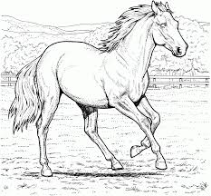 Horse Coloring Pictures Horses Pages Free 19161496 Attachment