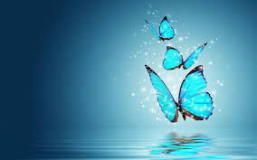 Beautiful Butterfly Images Hd Wallpaper