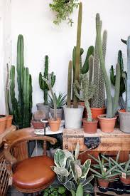 Small Picture The 25 best Cacti garden ideas on Pinterest Outdoor cactus