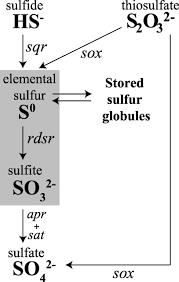 Fig 3 Sulfur Oxidation Genes In Diverse Deep Sea Viruses