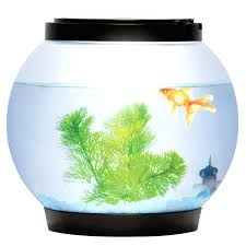 captivating 5 litre glass fish tank bowl aquarium water office room office ideas for home small spaces