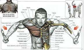 People who have a chest muscle pulled are not in a life endangering situation; The Ultimate Chest Workout For Building Mass The Trend Spotter