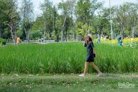 กรุงเทพก็มี ทุ่งทานตะวันบาน @ สวนรถไฟ - ชิลไปไหน