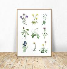Floral Printable Wall Art Botanical Flower Chart Flowers Poster Flower Types Instant Download Flowers Printable 11x14 16x20 A3 8x10