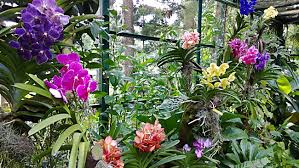 Small Picture Orchids of Sri Lanka