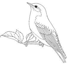 Coloring Pages Eastern Bluebird Coloring Page Pages Blue Bird