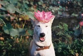 15 Surprising Ways To Make Your <b>Dog</b> Happy - BarkPost