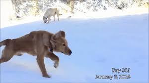 doge snow gif. Fine Doge Seeing Eye Dog Snowdog Snow GIF Inside Doge Snow Gif L