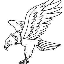 Small Picture Common kingfisher coloring pages Hellokidscom