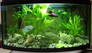 Image result for different aquariums can be put into a home