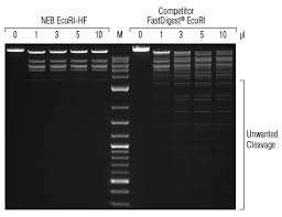 High Fidelity Hf Restriction Endonucleases Neb