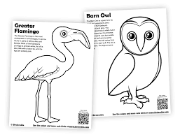 Flamingo And Barn Owl Coloring Pages In Free Downloads Coloring Pages