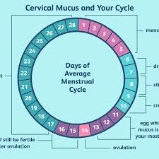 Cervical Mucus Chart Example What Is Egg White Cervical Mucus Ewcm