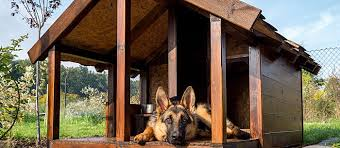 your dog gives you unconditional love and affection on the regular so why not show him some love by giving him a great outdoor space to call his own