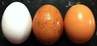 Resultado de imagen para aguacate, limon ,naranja y huevo