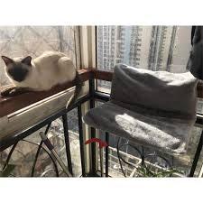 Waschbar Fenster Katze Sitz Katzen Sonnenbaden Mount Fenster