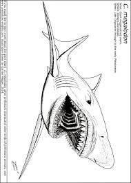 Small Picture Megalodon Coloring Pages qlyviewcom