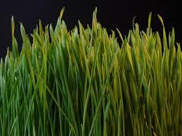 grass. Unique Grass Inside Grass T